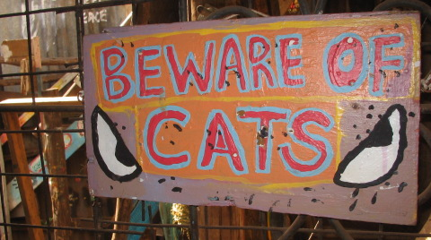 Beware of Cats